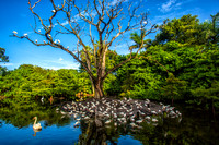 The Rookery - Flamingo Gardens