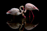 Seeing Double - Finalist in 2018 Flamingo Gardens Photo Contest