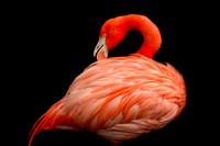 Pretty In Pink - Finalist in 2018 Flamingo Gardens Photo Contest